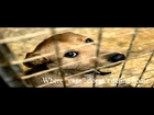 Philippine Animal Rescue and Care Society