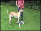 Andy at Grinshill Animal Rescue.