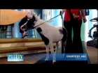 On CelebTV's Radar: The New Puppy Cam & A Tiny Horse